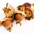 A chestnut and a hazelnut - Stock Photo