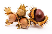 A chestnut and a hazelnut — Stock Photo