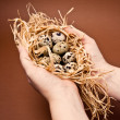 Royalty-Free Stock Photo: Human hands holding a quail nest