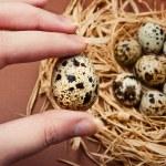 Hand holding a quail egg — Stock Photo