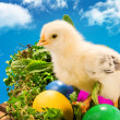 Baby Easter chick with painted eggs — 图库照片