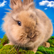 Cute bunny on a blue sky background — Photo