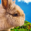 Cute bunny on a blue sky background — Stock Photo