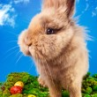 Stock Photo: Cute Easter bunny with painted eggs
