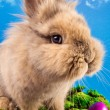 Cute Easter bunny with painted eggs — Stock Photo #2444690
