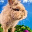 Cute Easter bunny with painted eggs — Stock Photo #2444767