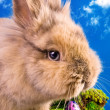 Cute Easter bunny with painted eggs — Stock Photo