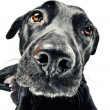 Funny closeup of a cute mutt — Stock Photo