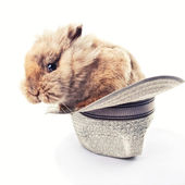 Cute bunny in a vintage hat — Stock Photo
