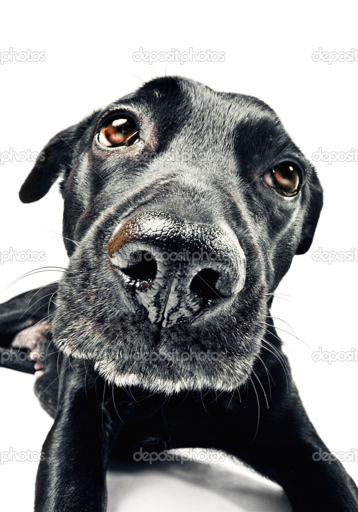 Funny closeup of a cute mutt   — Stock Photo #2517837