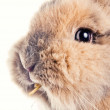 Cute bunny chewing on a straw — Stock Photo #2622792