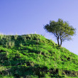 Lonely tree on a hill — Stock Photo #1558862