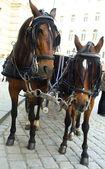 City horses — Stock Photo