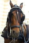 City horse — Stock Photo