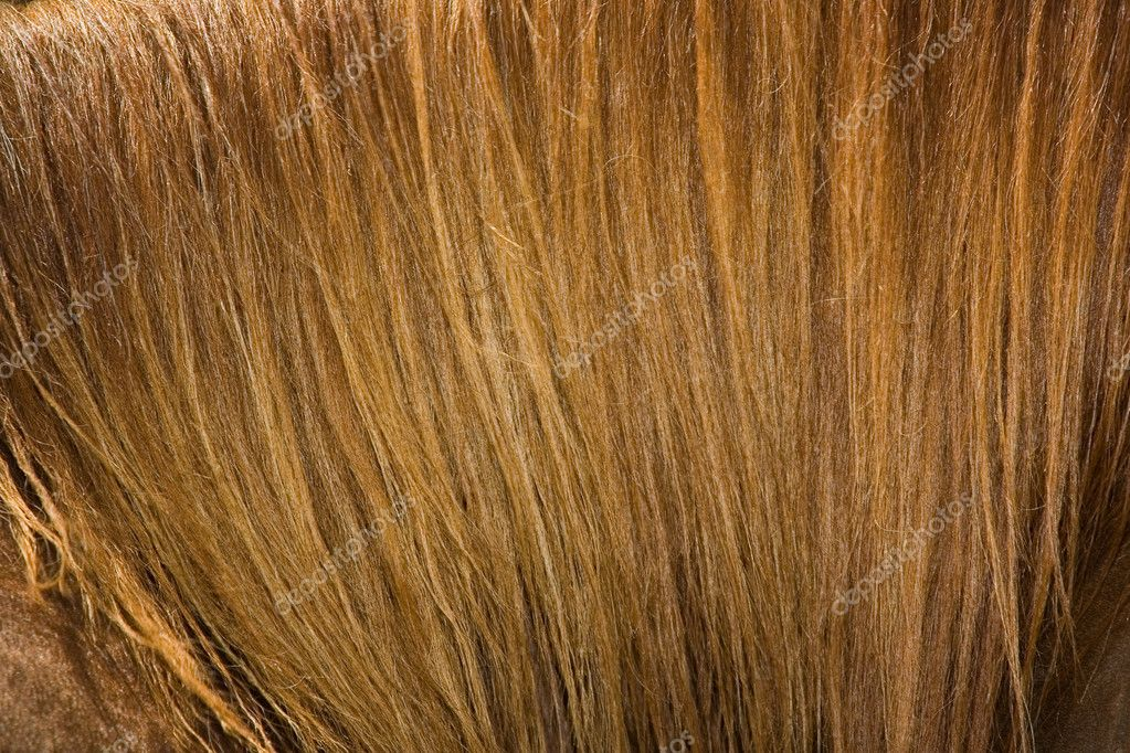 Closeup of  brown Horse mane. Natural Background  Stock Photo #1579302