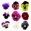 Pansies — Stock Photo #2265873
