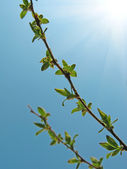 Growing green leaves — Stock Photo