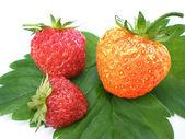 Unique strawberry — Stock Photo