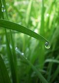 Dew drop — Stock Photo