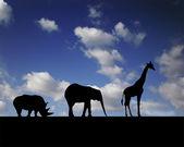 Walking animals — Stock Photo
