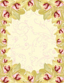 Orchid border — Stock Photo