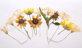 Abstract arrangement of pressed flowers — Stock Photo