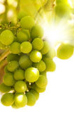 Green grapes close-up shot — Stock Photo