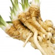 Fresh horseradish — Stock Photo