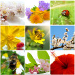 Beautiful nature collage of nine photos - Stock Photo