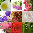 Beautiful nature collage of nine photos — Foto de Stock