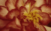 Flor de outono — Fotografia Stock
