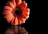 Orange flower reflected — Stock Photo