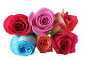 Bouquet of roses over white background — Foto Stock