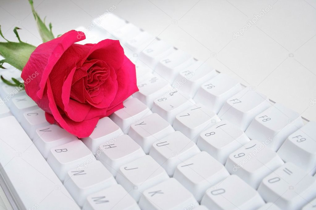Red rose over white computer keyboard — Stock Photo #1851031