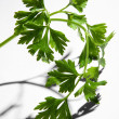 Parsley - Foto Stock