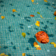 Stock Photo: Leaves on pool