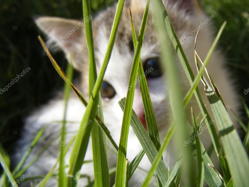 Ce cat purrs in the meadow — Stock Photo #2135945