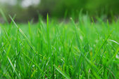Nature green grass — Stock Photo