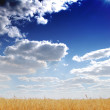 Stock Photo: Golden field, blue sky and clouds