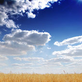 Golden field, blue sky and clouds — Stock Photo