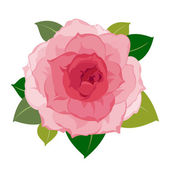 Vector peony flower — Stock Vector