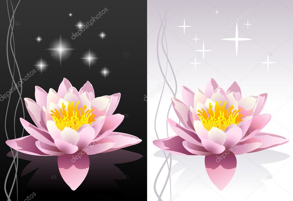 Detailed vector lotus flower with reflection on black and white abstract oriental backgrounds — Stock Vector #1564780