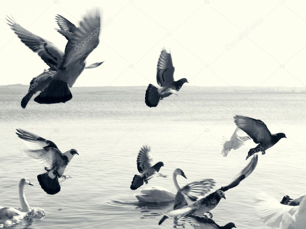 Birds in flight. Dramatic, split toning monochrome photo.   #1617961