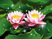 Lotus flowers on water and shining stars — Stock Vector