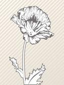 Doodle elegante flor amapola estilizada — Vector de stock