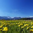 Stock Photo: Spring meadow