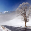 Winter road — Stock Photo #2573558
