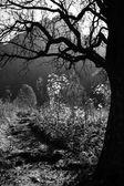Eng silhouet van een boom — Stockfoto