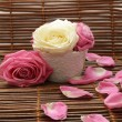 Roses and rose petals — Stock Photo