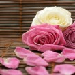 Rose and rose petals — Stock Photo